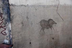 """affiche """"balance ton sanglier"""" datée de 65000 ans environ, dans une grotte"""